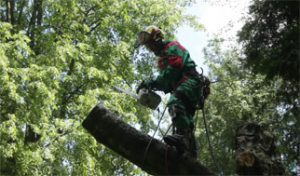 Does insurance cover Tree Removal?