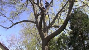 Tree Trimming Myrtle Beach DC