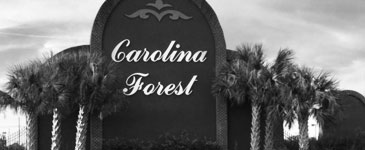 Carolina Forest palm trees