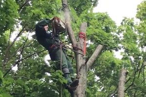 tree service in Surfside Beach SC