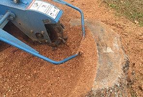 tree service North Myrtle Beach